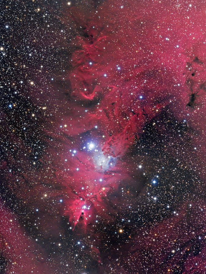 Ngc 2264 Photograph - The Cone Nebula - Wide-Field by Bob  Franke