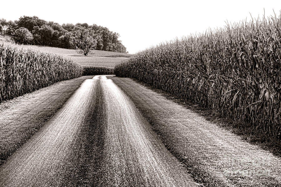 Road Photograph - The Corn Road by Olivier Le Queinec