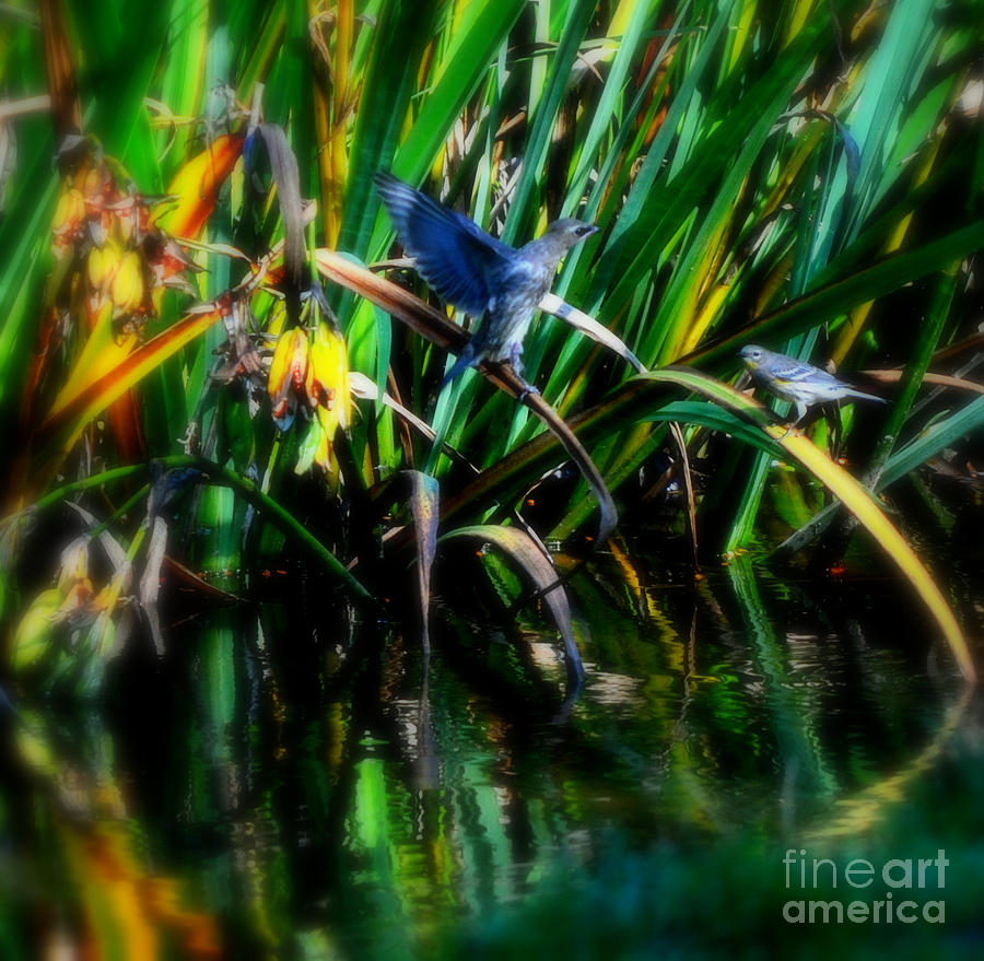 Grass Photograph - The Courting by Heather L Wright