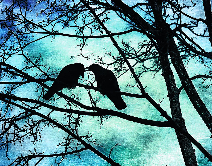 Crows Photograph - The Courtship Of Crows by Tammy Wetzel