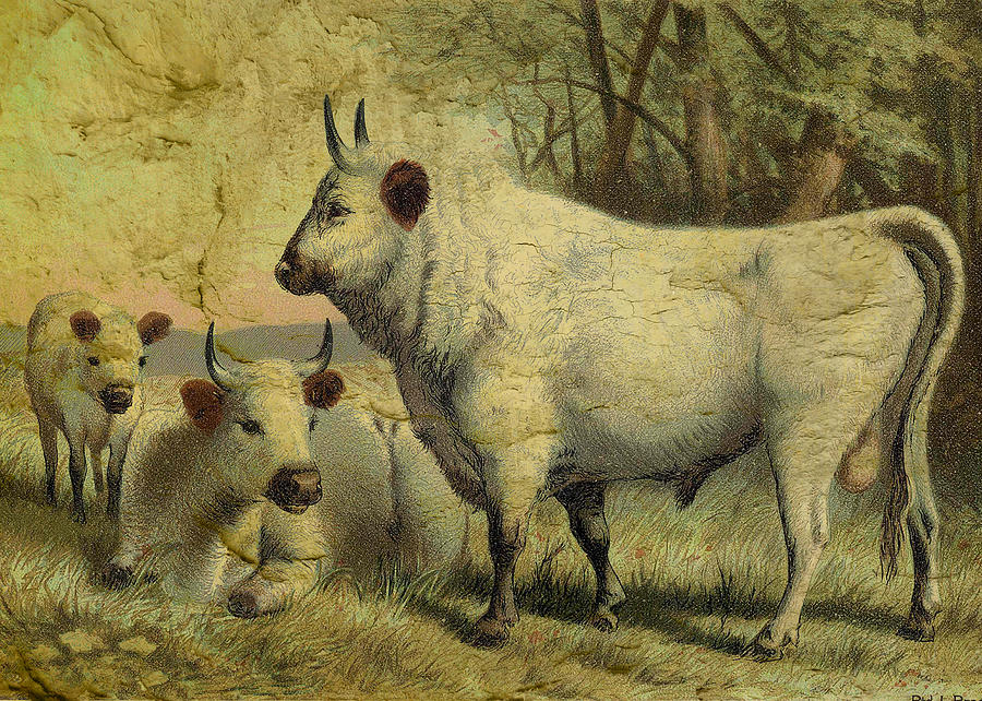 Cows Digital Art - The Cows Came Home by Sarah Vernon