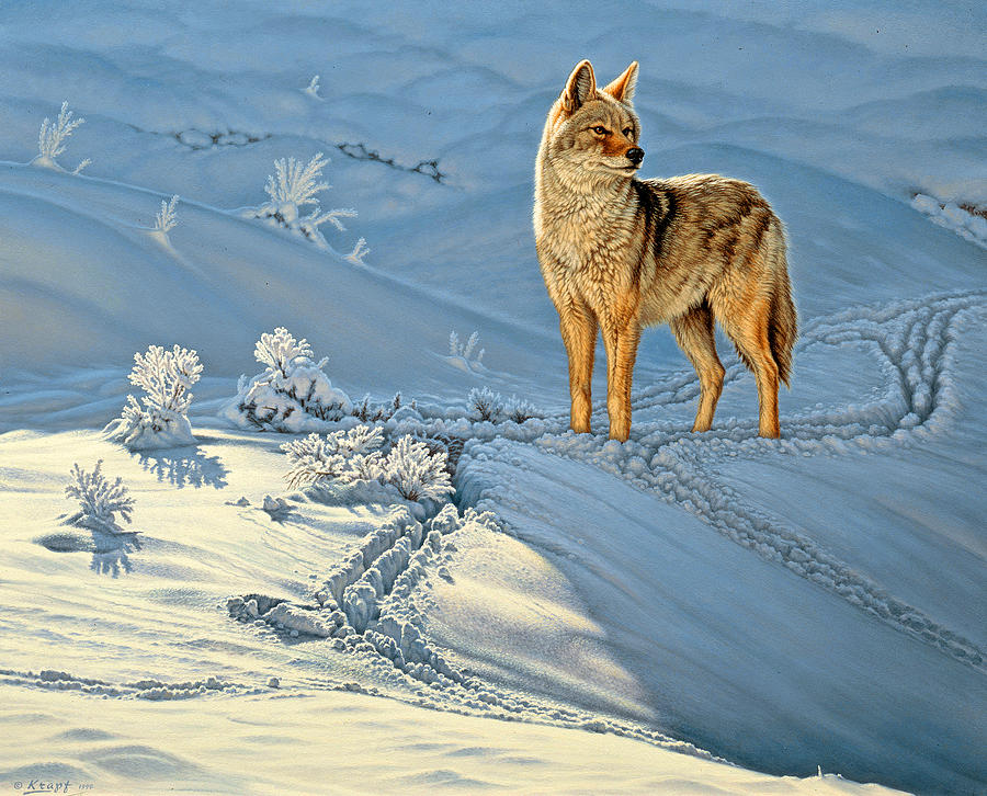 Wildlife Painting - the Coyote - Gods Dog by Paul Krapf