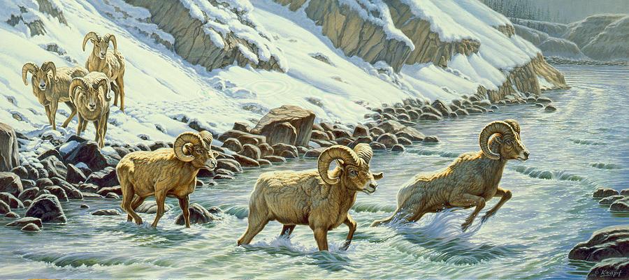Wildlife Painting - The Crossing - Bighorn by Paul Krapf