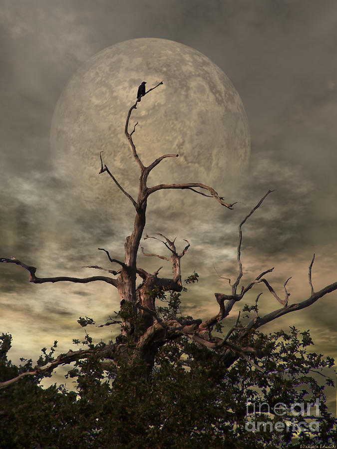 Crow Digital Art - The Crow Tree by Abbie Shores