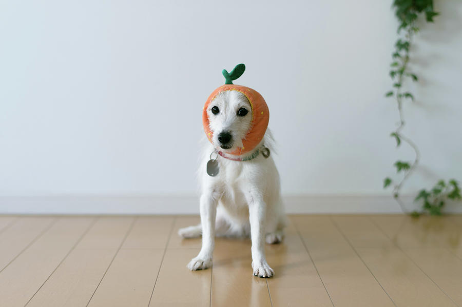 The Cute Dog With A Tangerine Cap Photograph by Hazelog