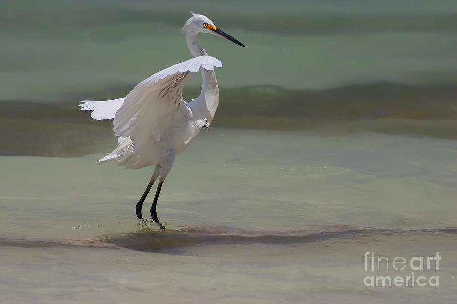 Egret Photograph - The Dance by John Edwards