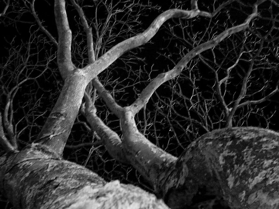 Plant Photograph - The Dark And The Tree 2 by Fabio Giannini