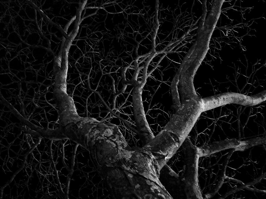 Plant Photograph - The Dark And The Tree by Fabio Giannini