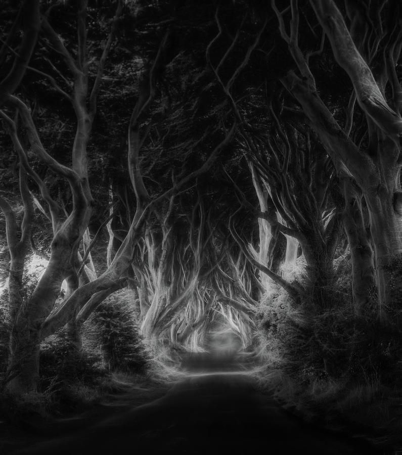 Ireland Photograph - The Dark Hedges by Saskia Dingemans