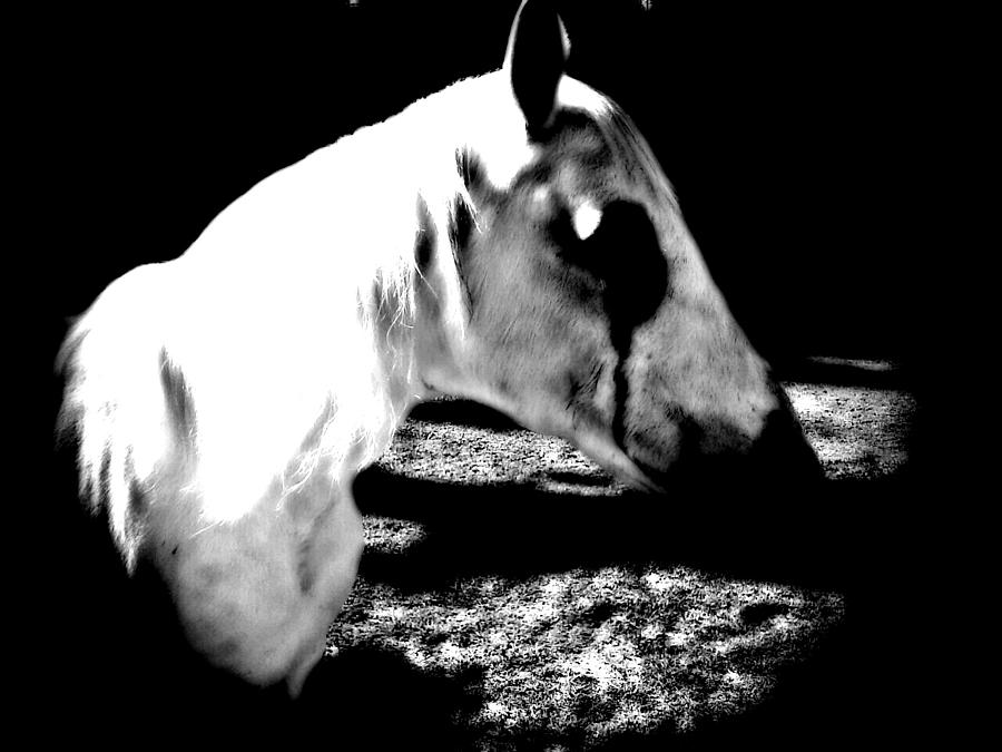 Horse Photograph - The Dark One by Chasity Johnson