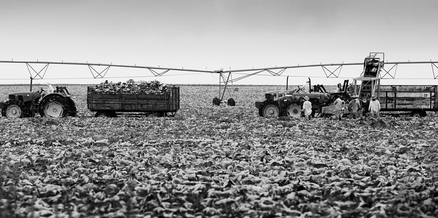 Canon Photograph - The Day On The Farm by Ricky L Jones