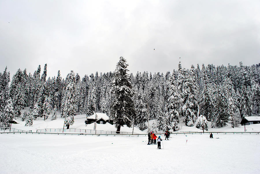 Gulmarg Photograph - The Dazzle Of Winter Trees At Gulmarg - Kashmir- India- Viators Agonism by Vijinder Singh