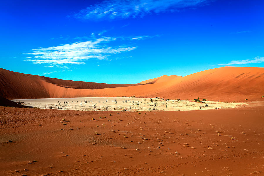 The Deadvlei Photograph by Gregory Daley  MPSA