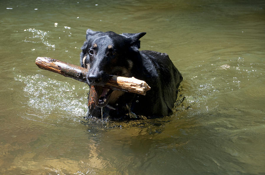 Dog Photograph - The Dog Days Of Summer by Bill Cannon