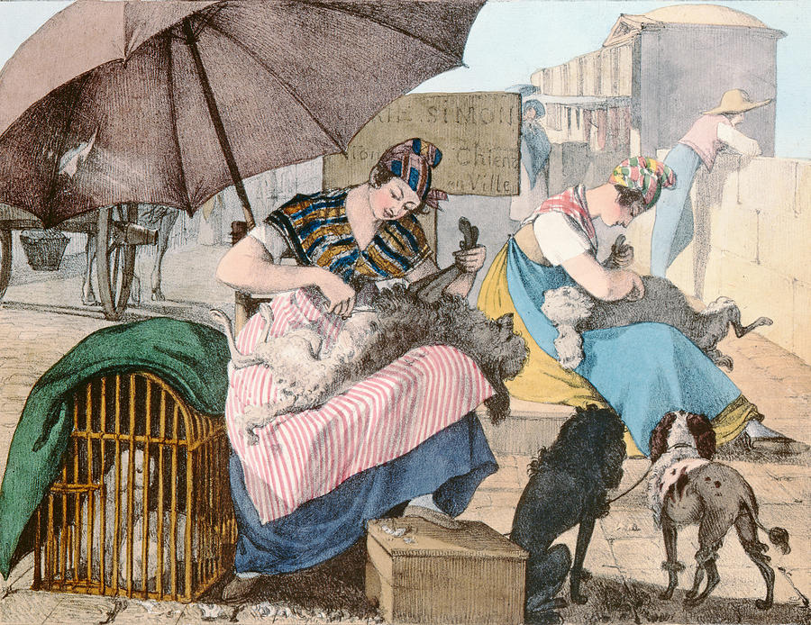 Dog Groomers Drawing - The Dog Groomers by John James Chalon