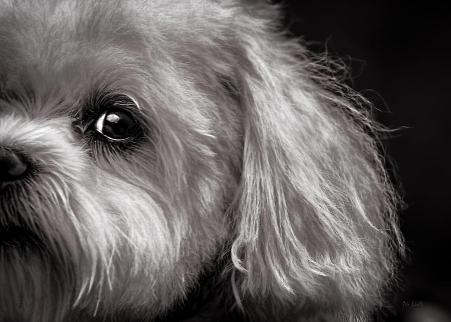 Dog Photograph - The Dog Next Door by Bob Orsillo