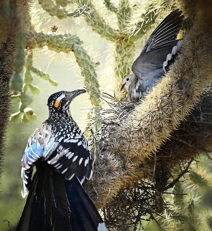 Greater Roadrunner Photograph - The Dove Vs. The Roadrunner by Saija  Lehtonen