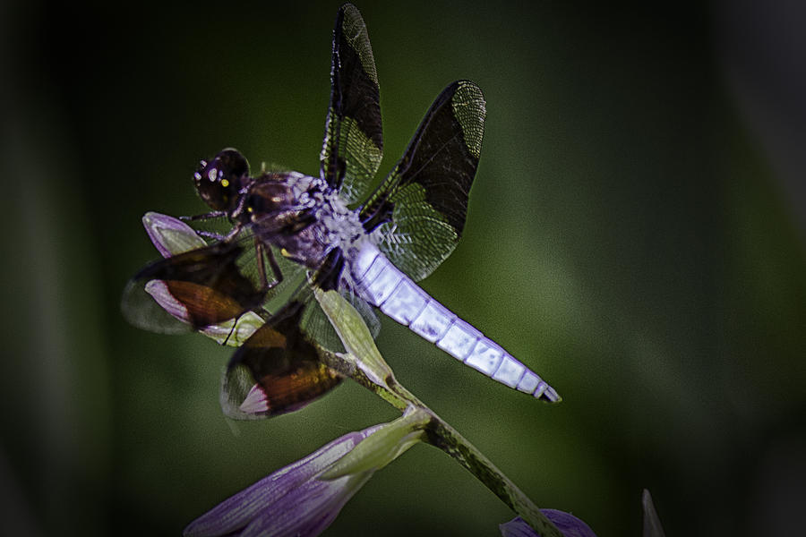 Dragonfly Photograph - The Dragons Lair by Barry Jones
