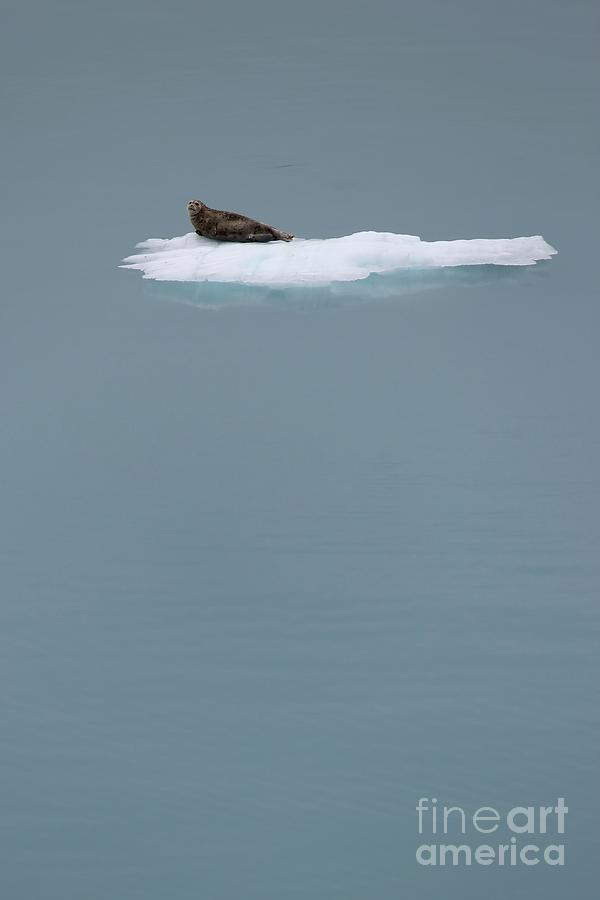 Animal Photograph - The Drifter by Sophie Vigneault