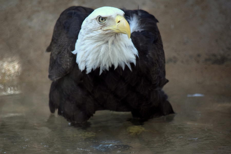 The Eagle Has Landed Photograph