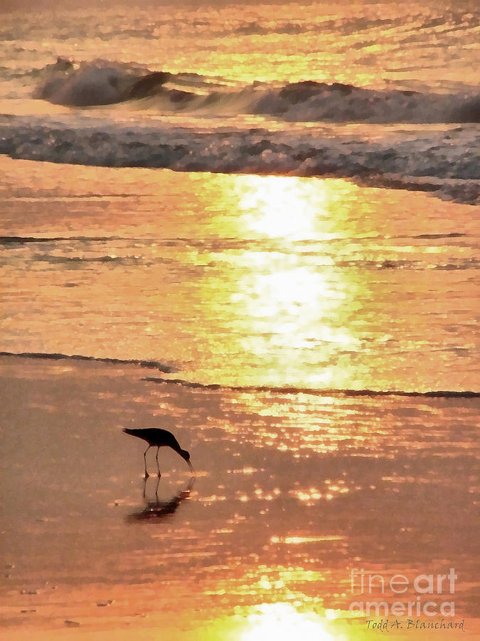 Landscape Photograph - The Early Bird by Todd A Blanchard