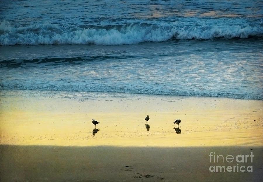 Coastal Photograph - The Early Birds by Ellen Cotton