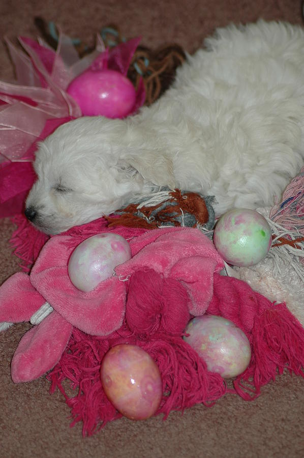 Puppy's Photograph - The Easter Hunt by Scott Ware