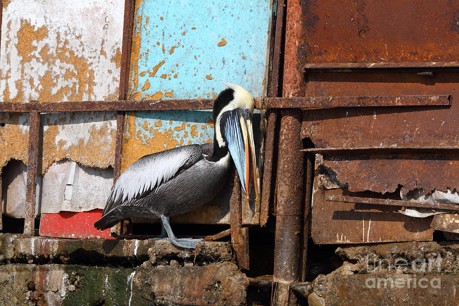 Peruvian Photograph - The Eavesdropper by James Brunker