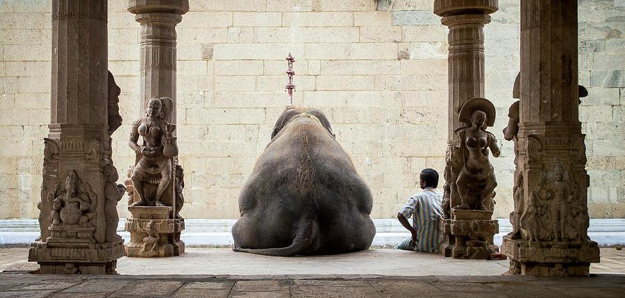 Elephant Photograph - The Elephant & Its Mahot by