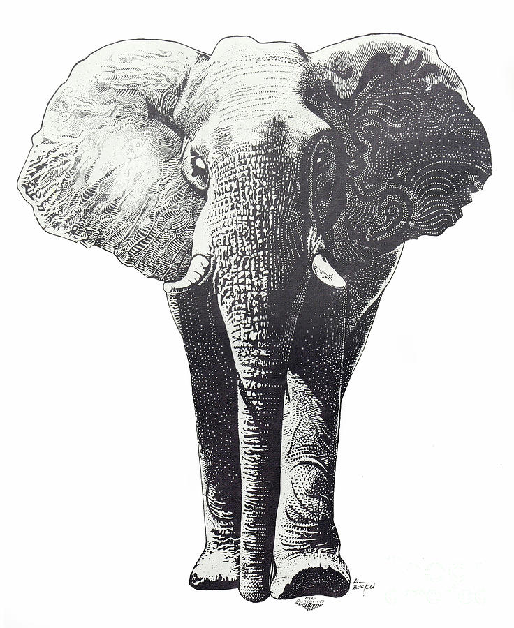 Elephant Drawing - The Elephant by Kean Butterfield