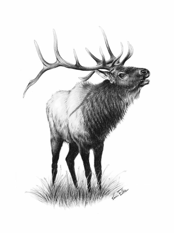 The Elk Drawing by Karen Elkan