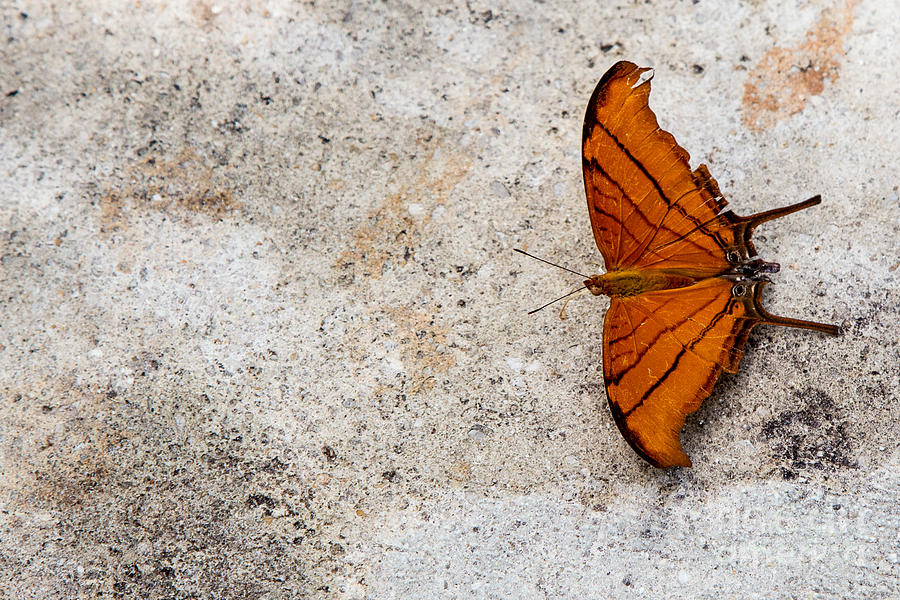 Butterfly Photograph - The Elusive Butterfly  by Rene Triay Photography