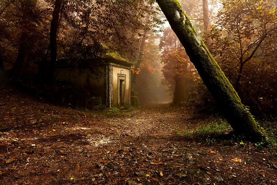 The Enchanted Trail Photograph