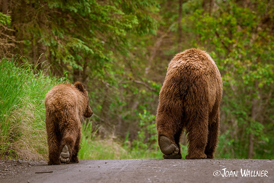 Alaska Photograph - The Grizzly End by Joan Wallner