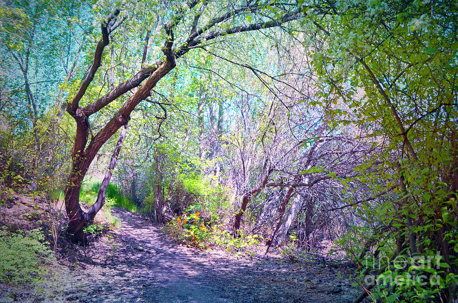 Spring Photograph - The Entrance by Tara Turner