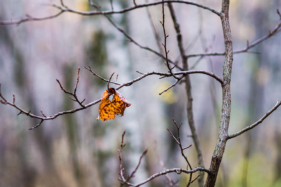 Abstract Photograph - The Essence Of Autumn - Featured 3 by Alexander Senin