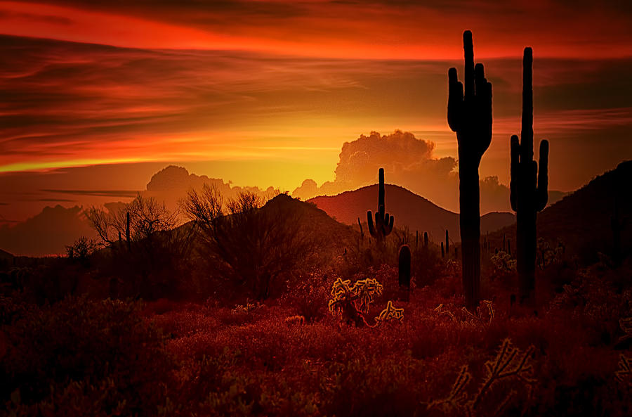 Desert Southwest Photograph - The Essence of the Southwest by Saija  Lehtonen