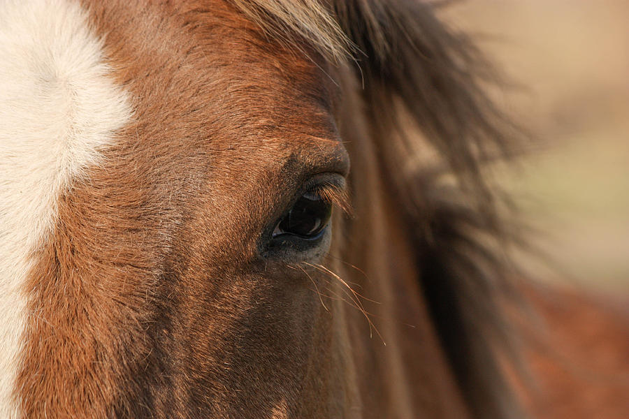 Horse Photograph - The Eye by Jacki Smoldon