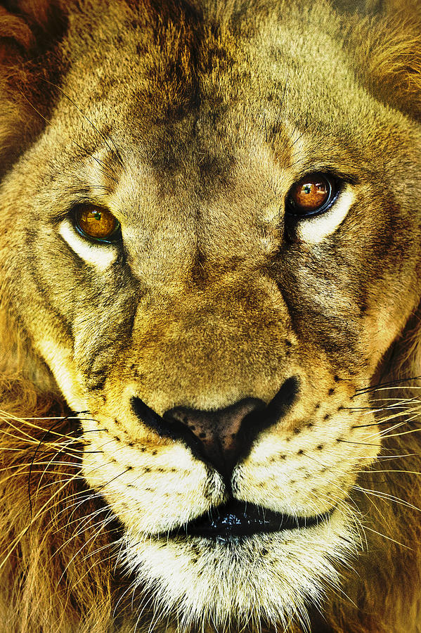 African Photograph - The Eyes Have It by Steve Smith