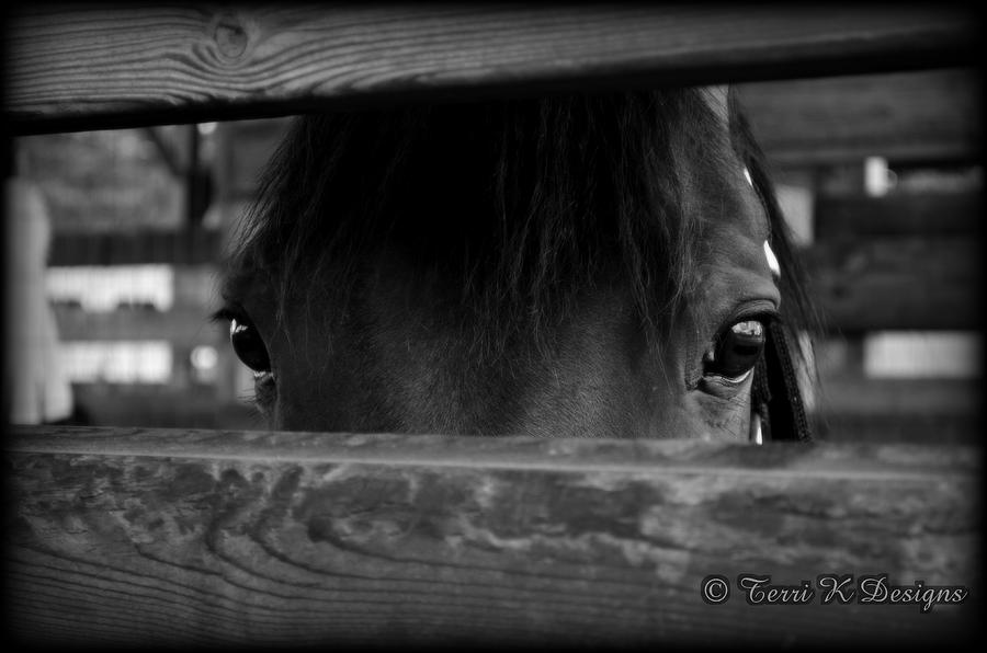 Horse Photograph - The Eyes Say It All by Terri K Designs