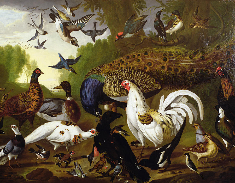 Bird Photograph - The Fable Of The Raven With A Peacock, Cockerel, Woodpecker, Jay, Woodcock, And Magpie by Pieter Casteels
