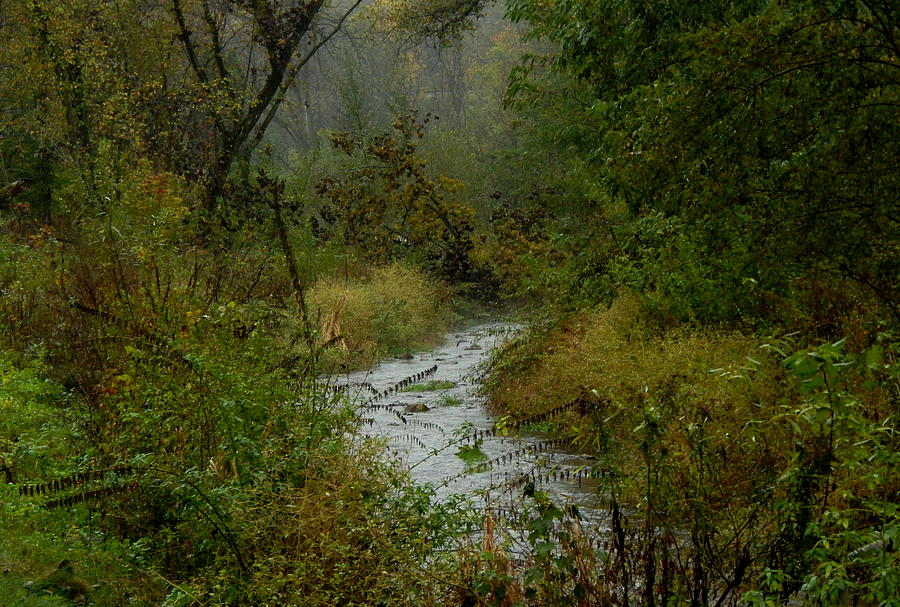 Autumn Photograph - The Fae Crick Will Lead You by Wild Thing