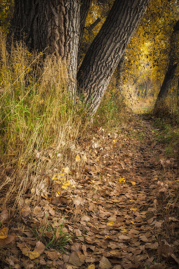 Fall Photograph - The Fall Way Home by Michael Van Beber
