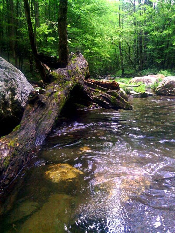 River Photograph - The Fallen by Dwayne Gresham
