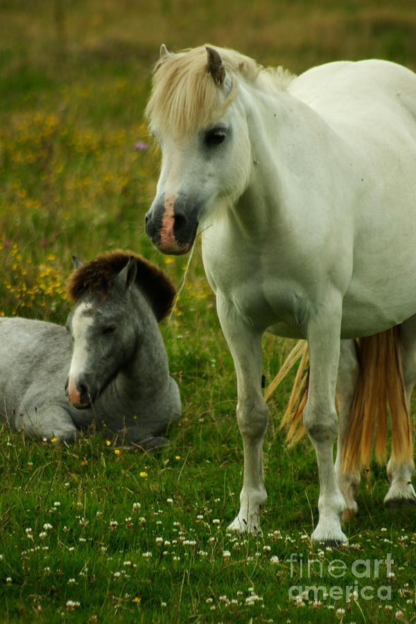 Horse Photograph - The Family by Angel Ciesniarska
