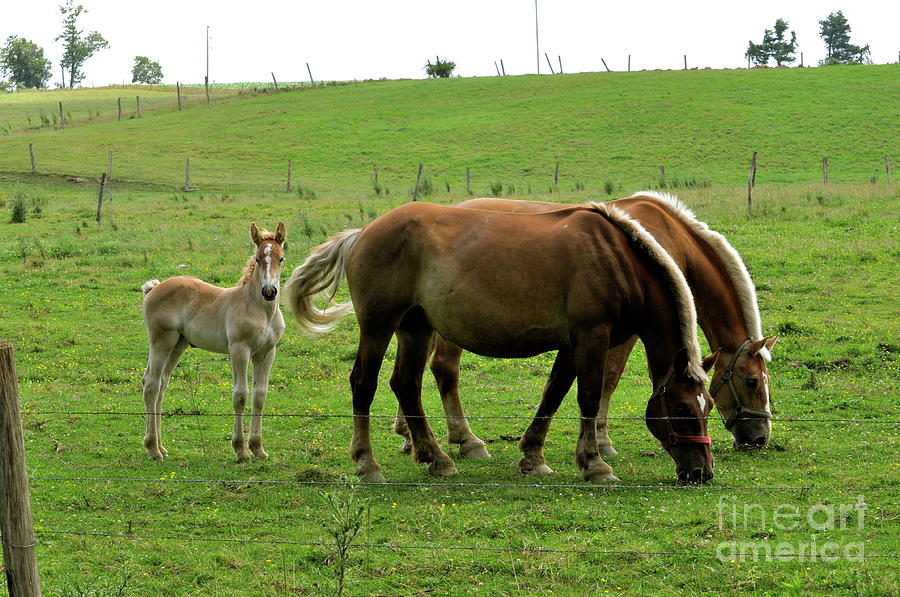 Amish Photograph - The Family Of Three. by Penny Neimiller