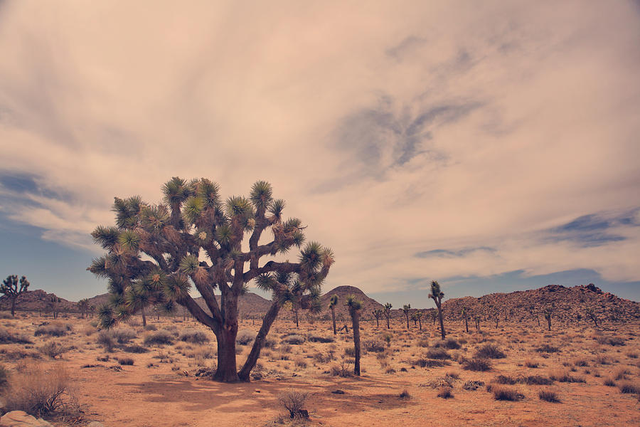 Joshua Tree National Park Photograph - The Feeling Of Freedom by Laurie Search