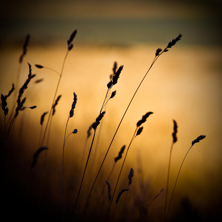 Grassland Photograph - The Field by Dave Bowman