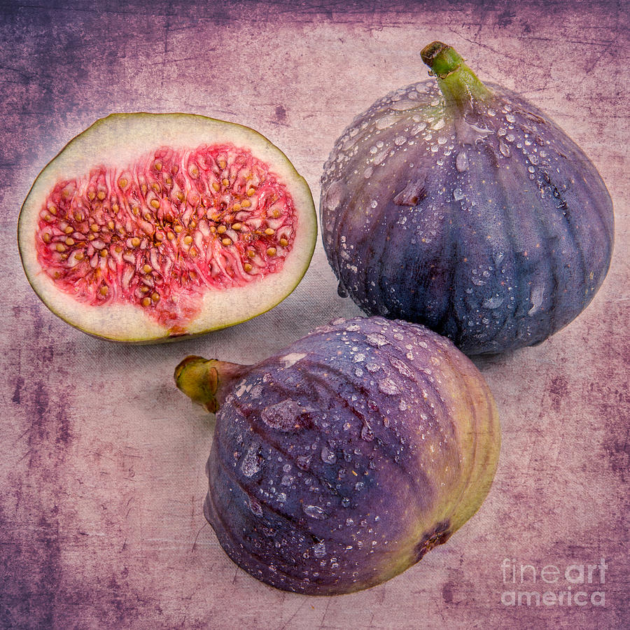 the fig II Photograph