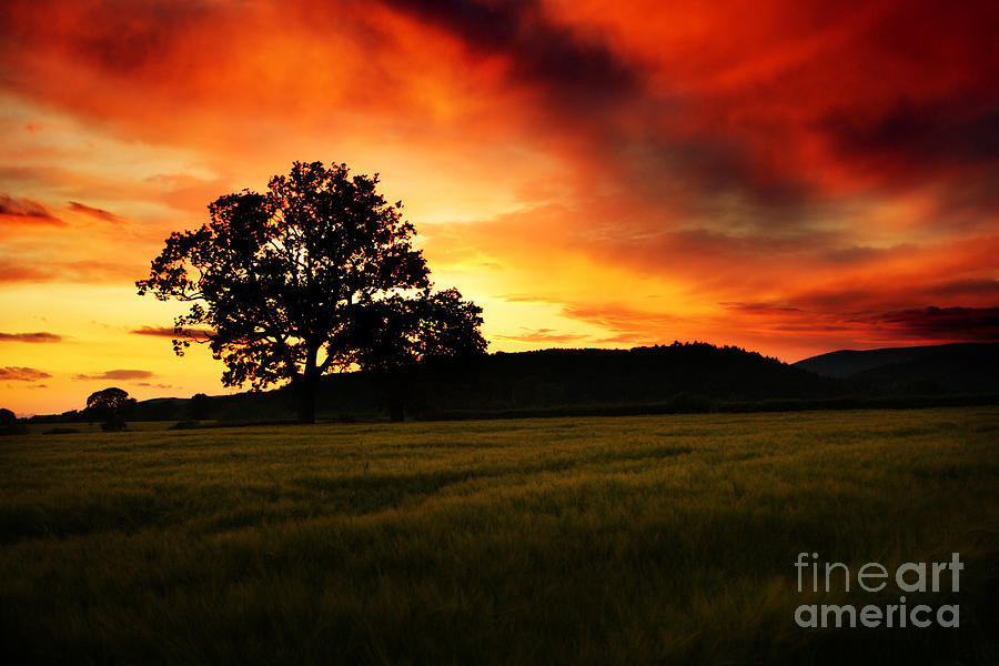 the Fire on the Sky Photograph